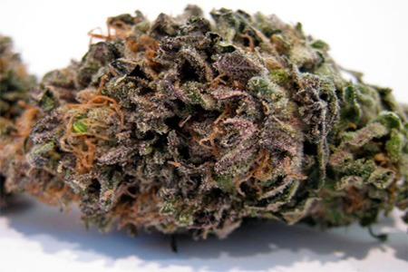 sweet purple marihuana cogollo