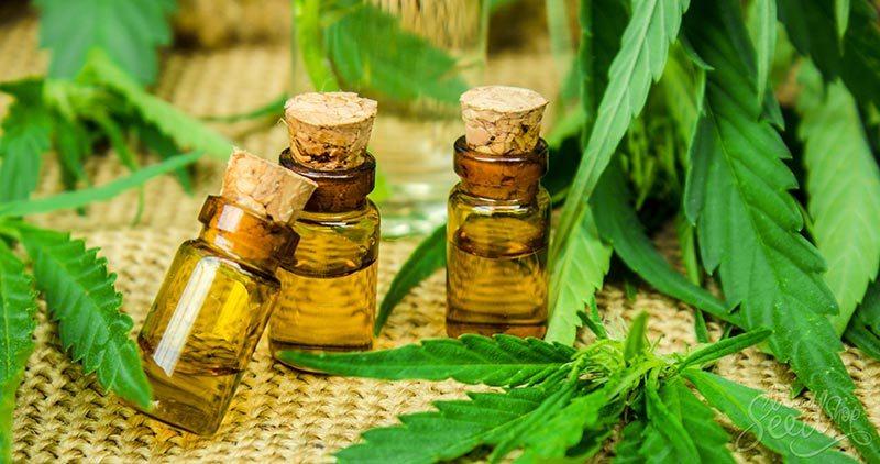 tintura de cannabis