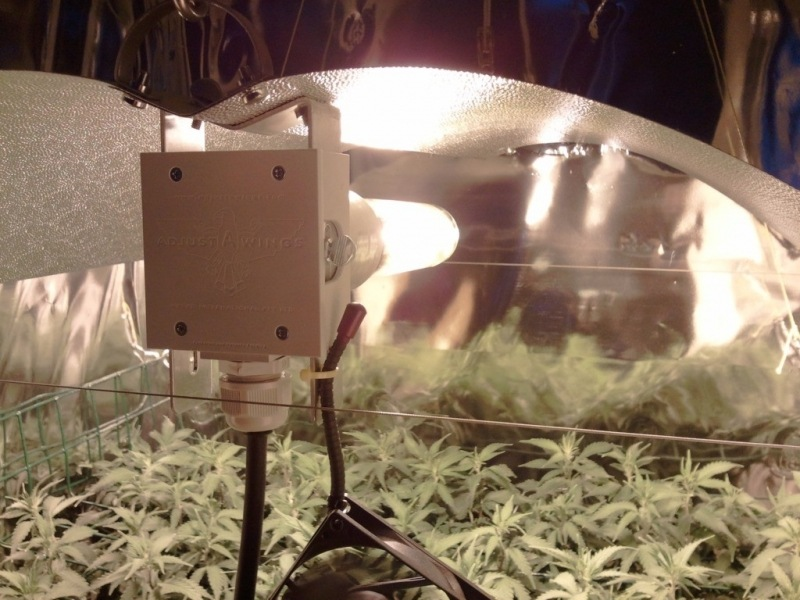 cultivo marihuana optimizado
